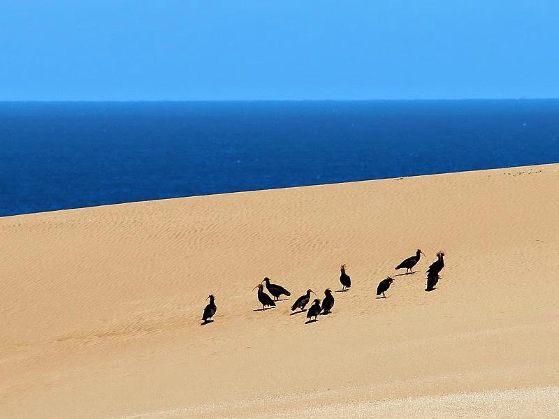 Ibis Chauves - Souss Massa