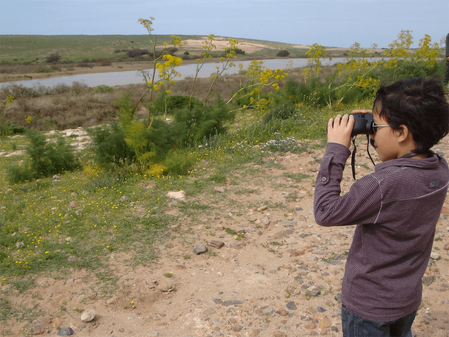 Birdwatching - Oued Massa