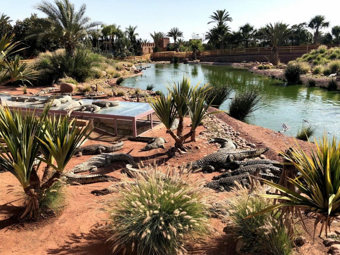 Sortie Crocoparc - Agadir
