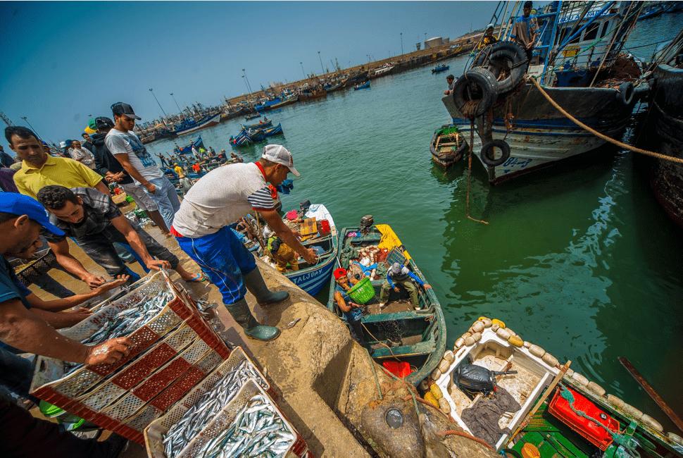Bateaux - Port d'Agadir