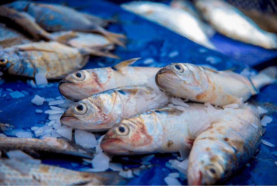 Pêche du Jour - Agadir