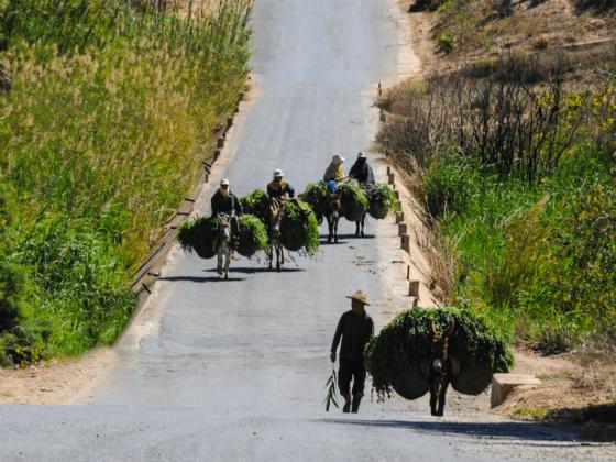Souk - Région Chtouka Ait Baha
