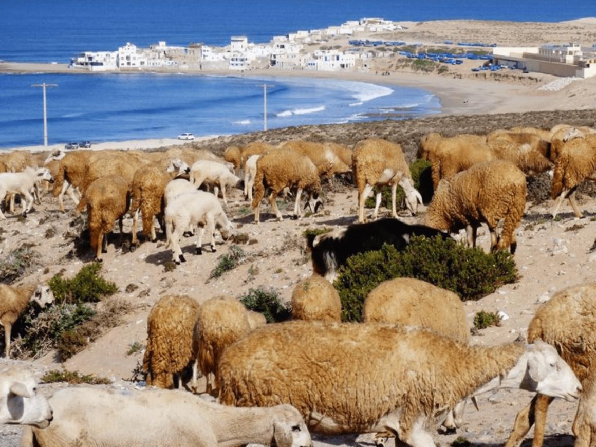 Vue - Village de Tifnit