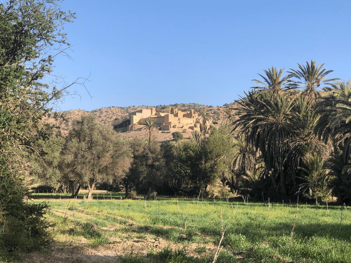 Kasbah - Oasis de Tioute
