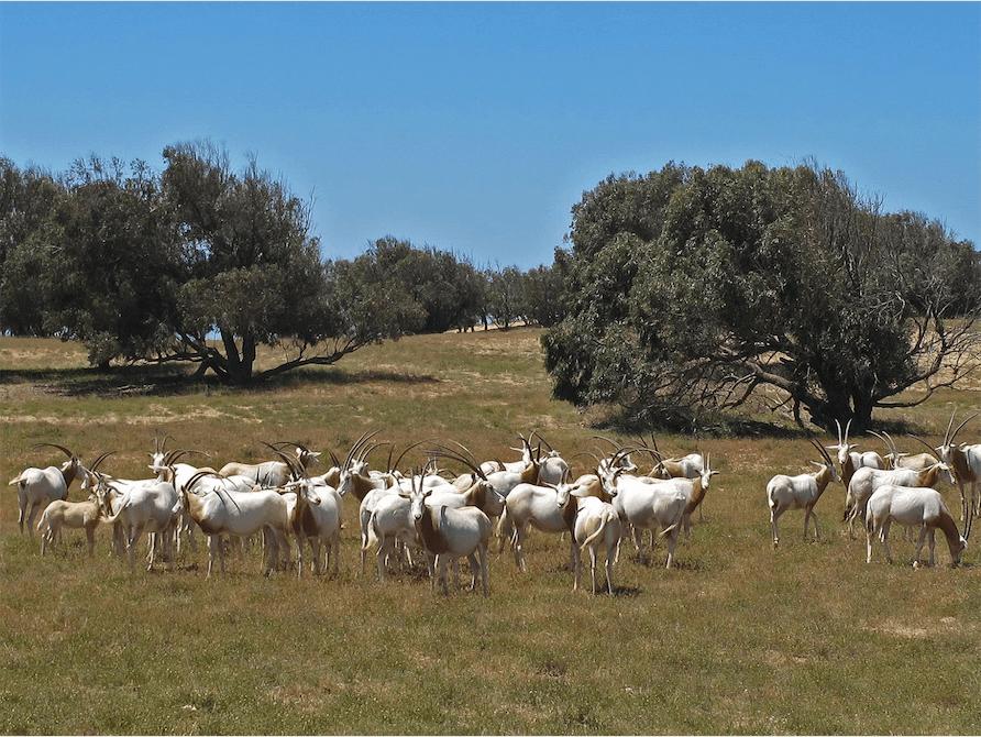 Parc National du Souss Massa