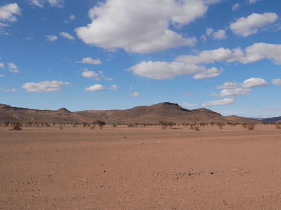 Souss Massa - Circuit désert