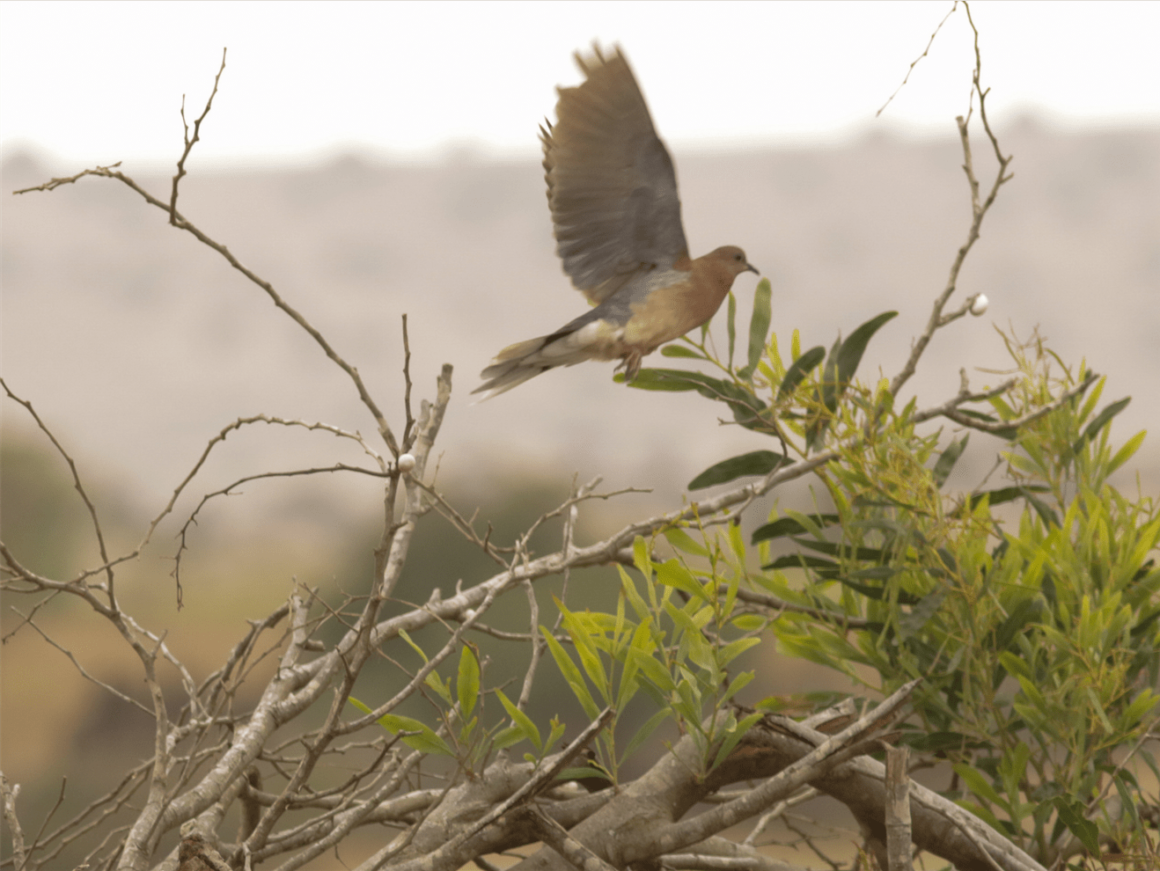 Birdwatching - Oued Souss